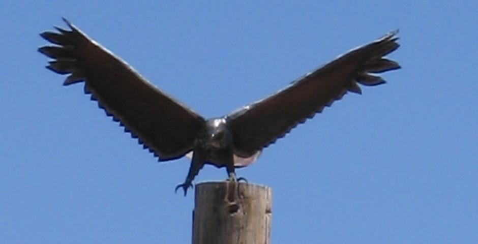 Eagle Landing (detail), Dragoon Mountain Ranch, Saint David, Arizona ^private commission