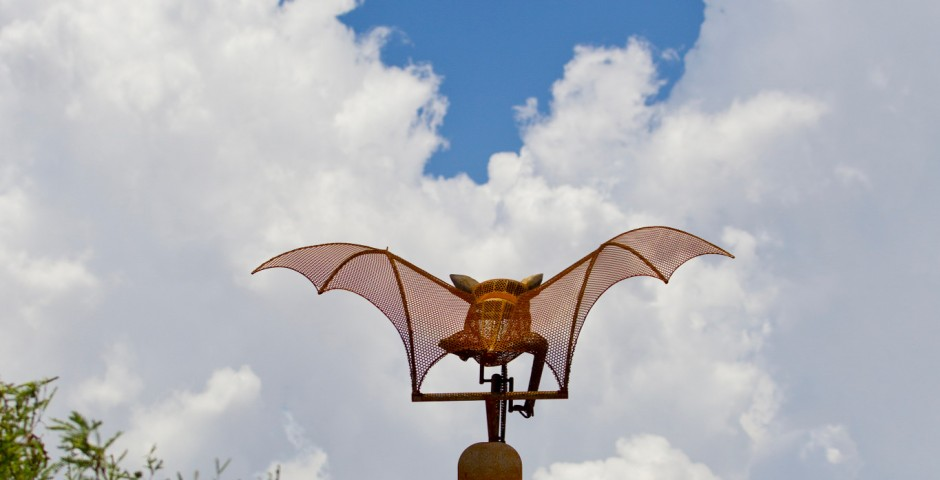 Batty Biker (detail), Tucson, Arizona